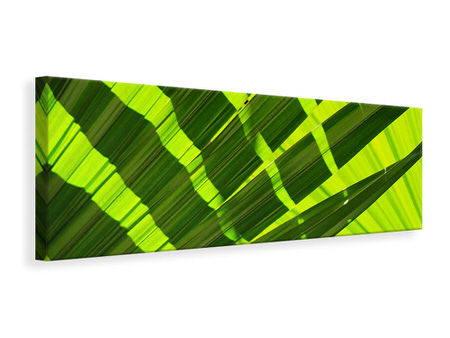 Panoramic Canvas Print The palm leaf in XL