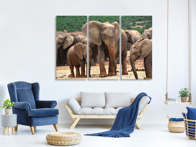 3 Piece Canvas Print Elephant herd in Africa