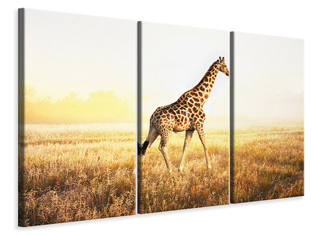 3 Piece Canvas Print The Giraffe