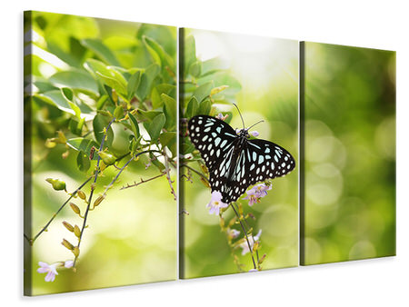 3 Piece Canvas Print Papilio Butterfly XXL