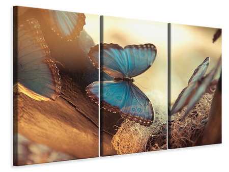 3 Piece Canvas Print Butterflies
