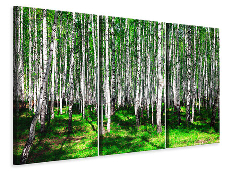 3 Piece Canvas Print Summerly Birch Forest