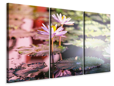 3 Piece Canvas Print Lilies In Pond