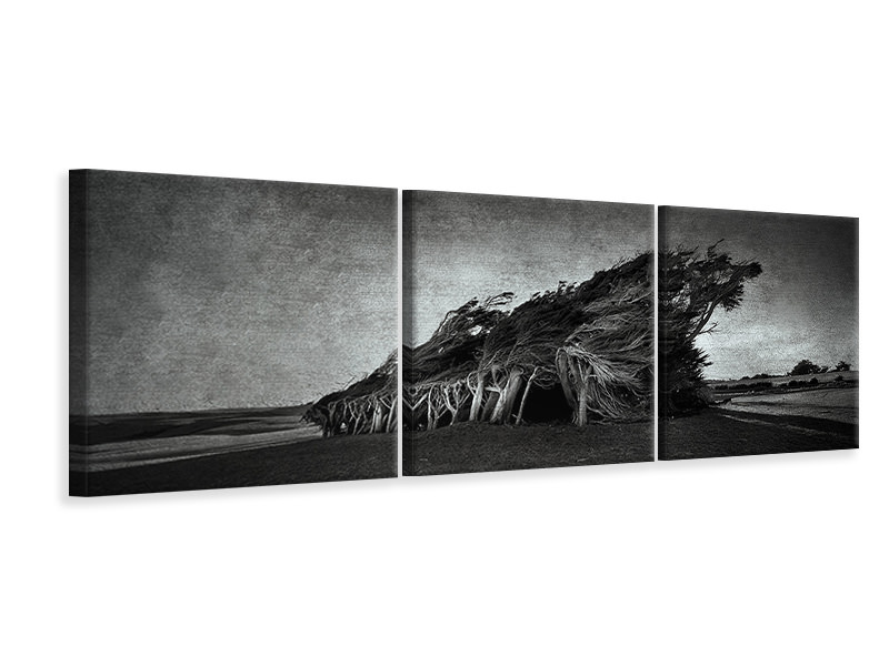 Panoramic 3 Piece Canvas Print Wind Blown