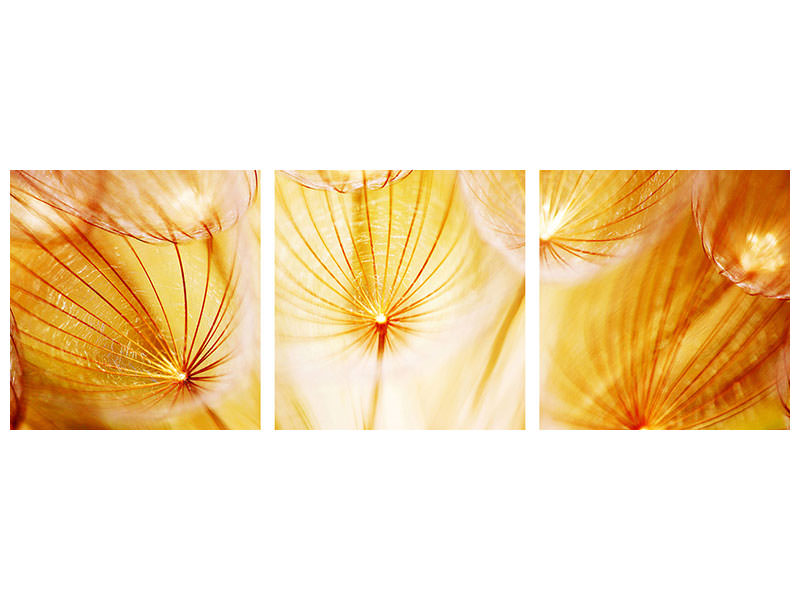 Panoramic 3 Piece Canvas Print Close Up Dandelion In Light