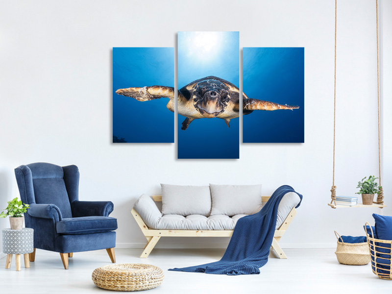 Modern 3 Piece Canvas Print Face To Face With A Hawksbill Sea Turtle