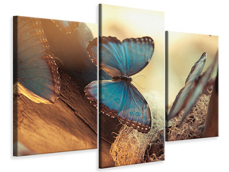 Modern 3 Piece Canvas Print Butterflies