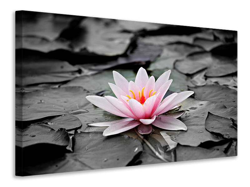Canvas print The art of water lily