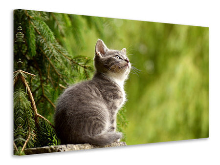 Canvas print wildcat
