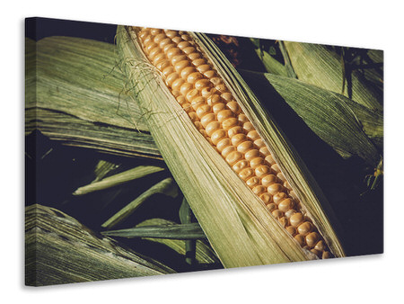 Canvas print Fresh sweetcorn