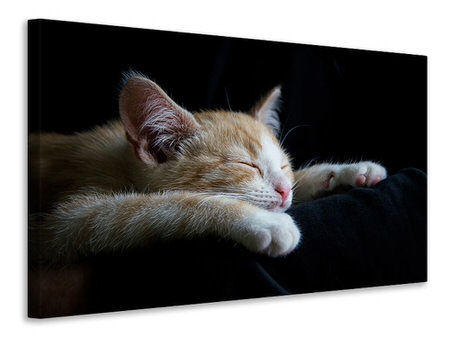 Canvas print Lazy cat