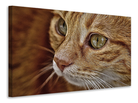 Canvas print Close up cat's head