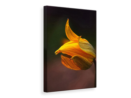 Canvas print Shine
