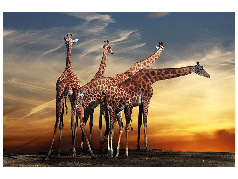 Tableau sur toile Girafe at Sunset