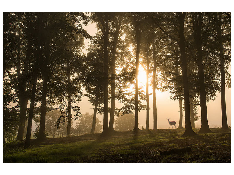 Canvas print Deer In The Morning Mist