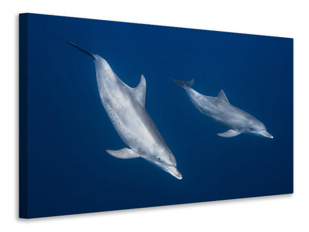 Canvas print Bottlenose Dolphins