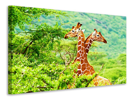 Canvas print Giraffes Love