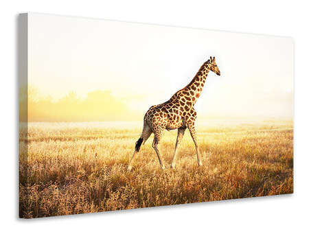 Canvas print The Giraffe