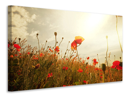 Canvas print The Poppy Field At Sunrise