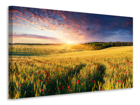 Canvas print A Flower Field At Sunrise