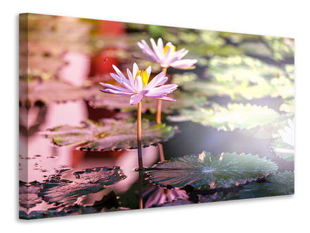 Canvas print Lilies In Pond