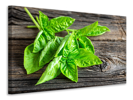 Canvas print Basil Leaves