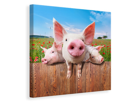 Canvas print Pig In Luck