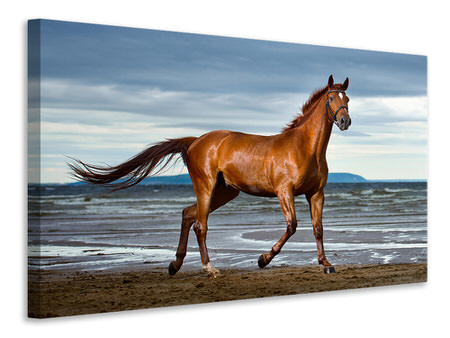 Canvas print A Thoroughbred At The Sea