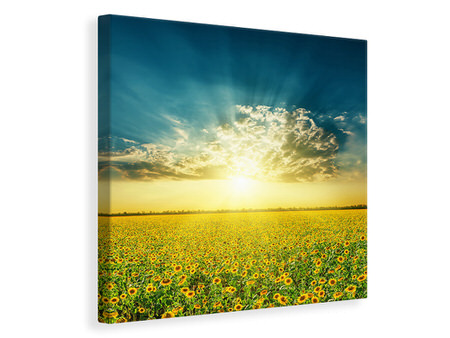 Canvas print Sunflowers In The Evening Sun